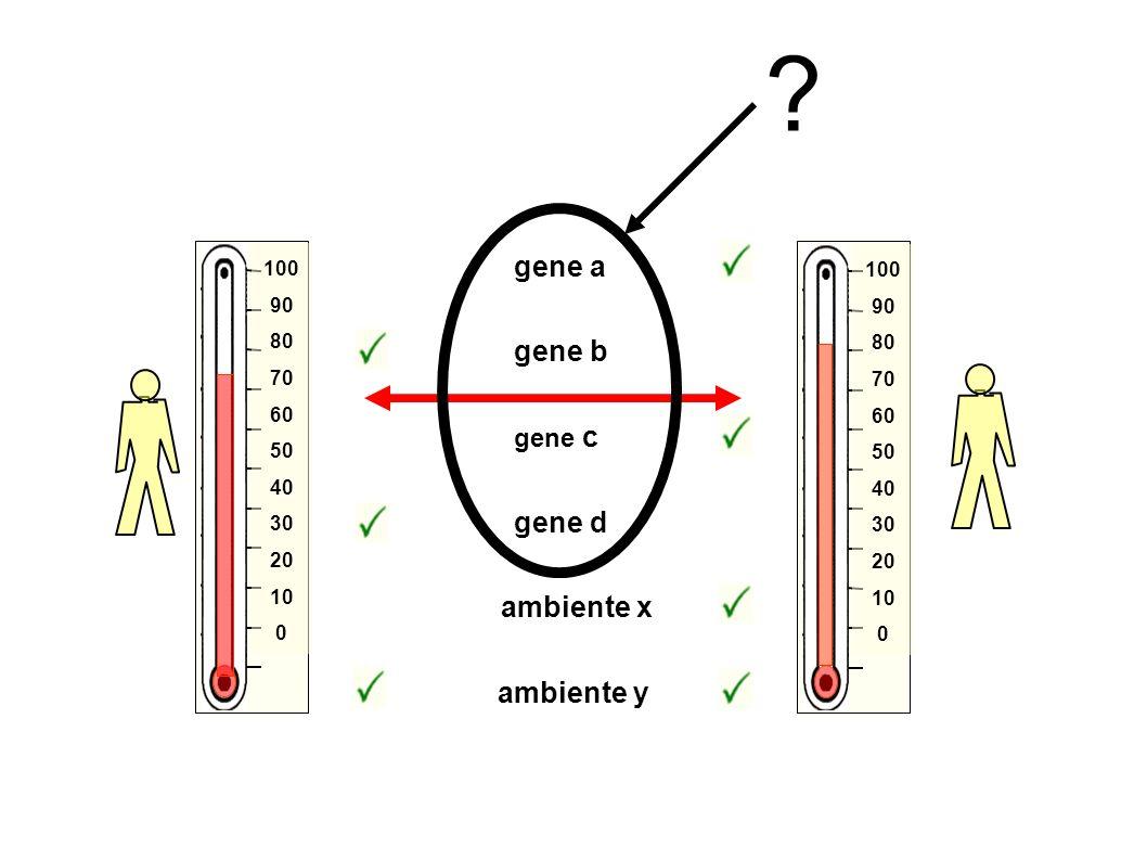 gene b gene d ambiente y ambiente x gene a gene c 100 90 80 70 60 50 40 30 20 10 0 100 90 80 70 60 50 40 30 20 10 0 ?