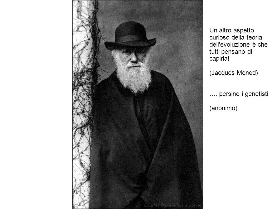 Un altro aspetto curioso della teoria dell'evoluzione è che tutti pensano di capirla! (Jacques Monod) …. persino i genetisti (anonimo)