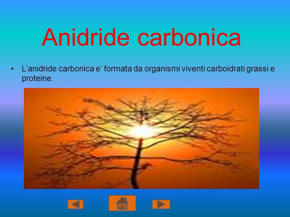 Anidride carbonica Lanidride carbonica e formata da organismi viventi carboidrati grassi e proteine.