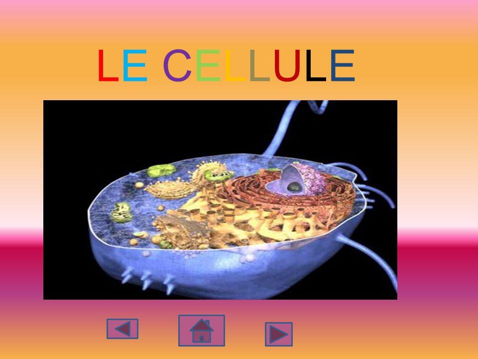 LE CELLULE