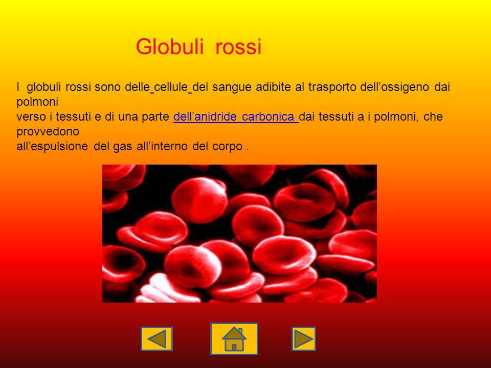 I globuli rossi sono delle cellule del sangue adibite al trasporto dellossigeno dai polmoni verso i tessuti e di una parte dellanidride carbonica dai