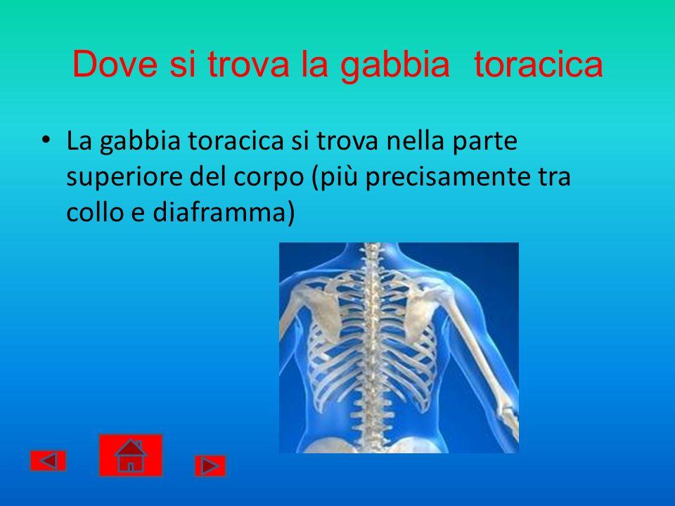 Dove si trova la gabbia toracica La gabbia toracica si trova nella parte superiore del corpo (più precisamente tra collo e diaframma)