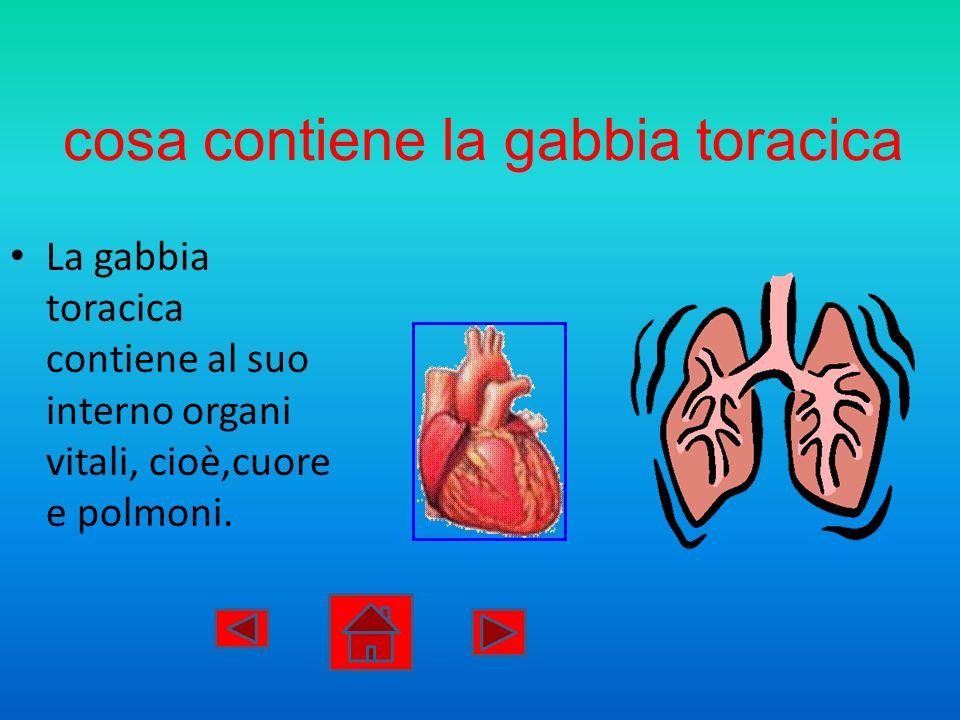 cosa contiene la gabbia toracica La gabbia toracica contiene al suo interno organi vitali, cioè,cuore e polmoni.