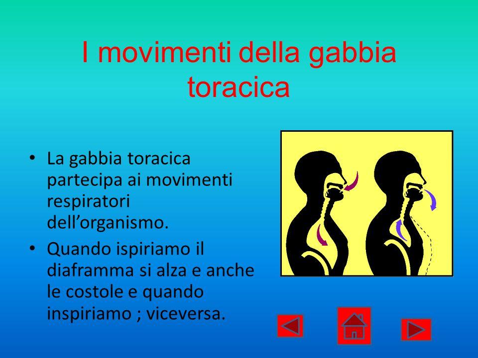 I movimenti della gabbia toracica La gabbia toracica partecipa ai movimenti respiratori dellorganismo. Quando ispiriamo il diaframma si alza e anche l