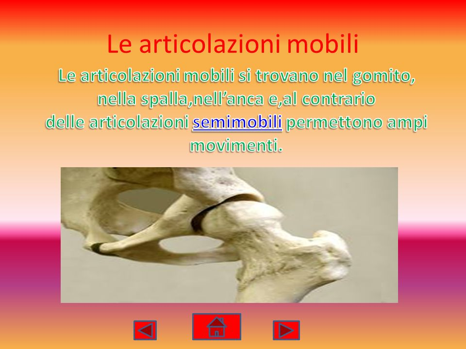 Le articolazioni mobili