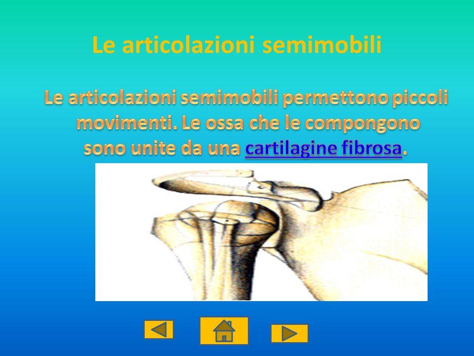 Le articolazioni semimobili