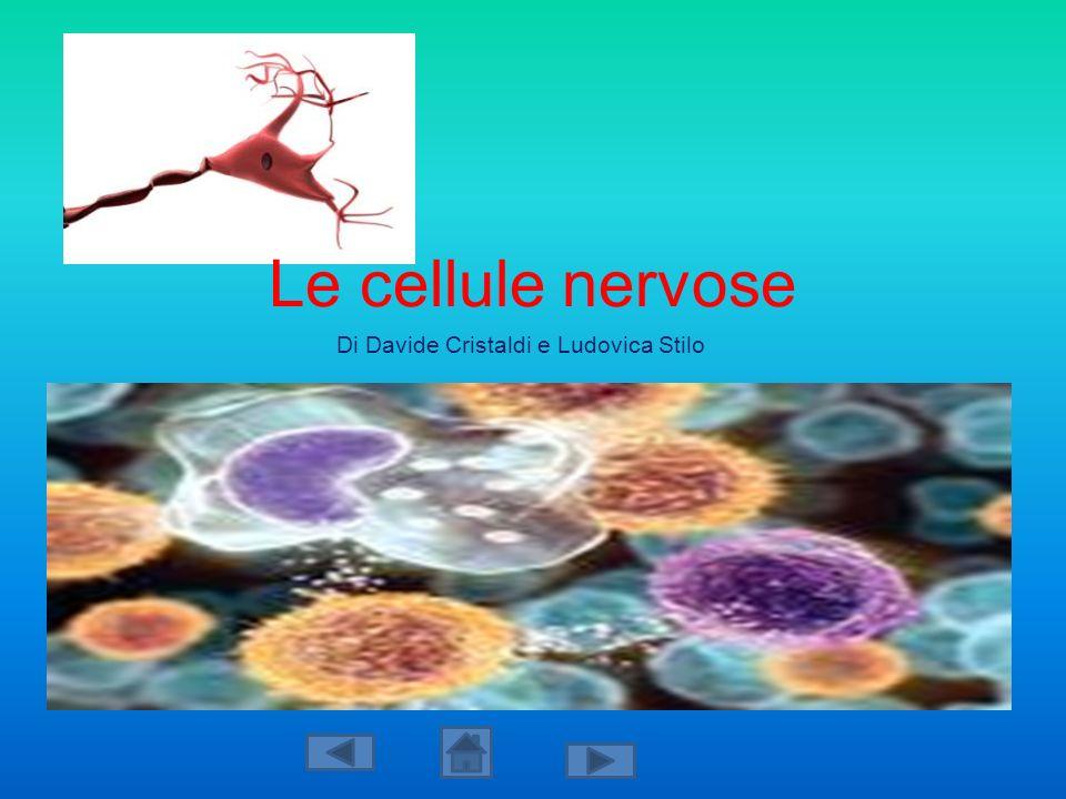 Le cellule nervose Di Davide Cristaldi e Ludovica Stilo