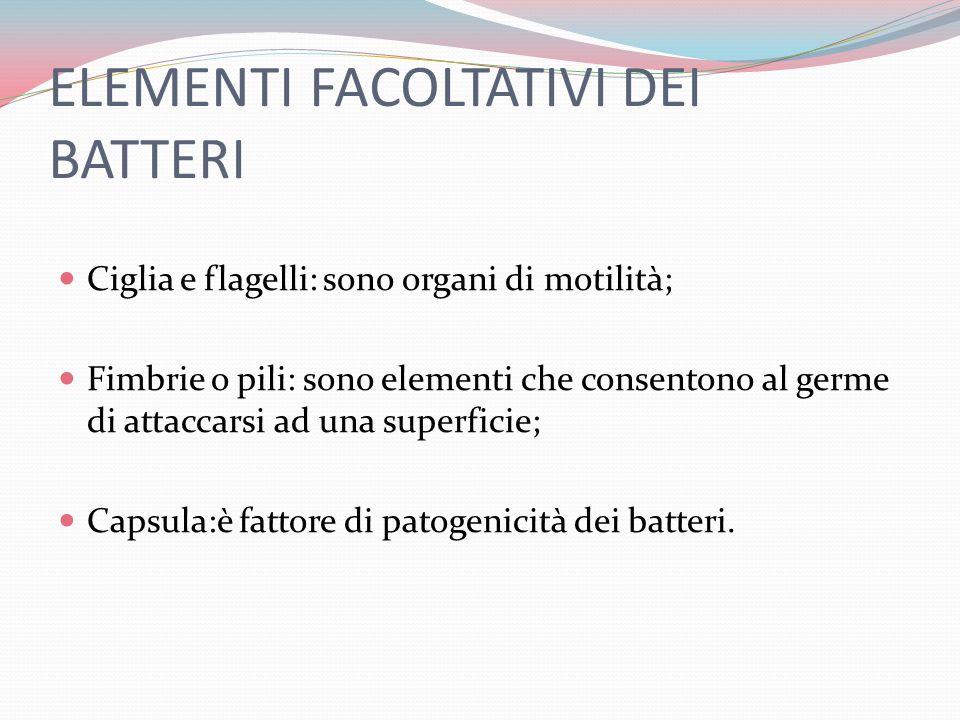 ELEMENTI FACOLTATIVI DEI BATTERI Ciglia e flagelli: sono organi di motilità; Fimbrie o pili: sono elementi che consentono al germe di attaccarsi ad una superficie; Capsula:è fattore di patogenicità dei batteri.