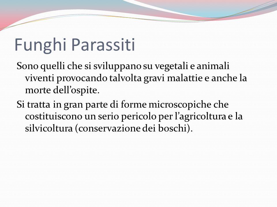 Funghi Parassiti Sono quelli che si sviluppano su vegetali e animali viventi provocando talvolta gravi malattie e anche la morte dellospite.