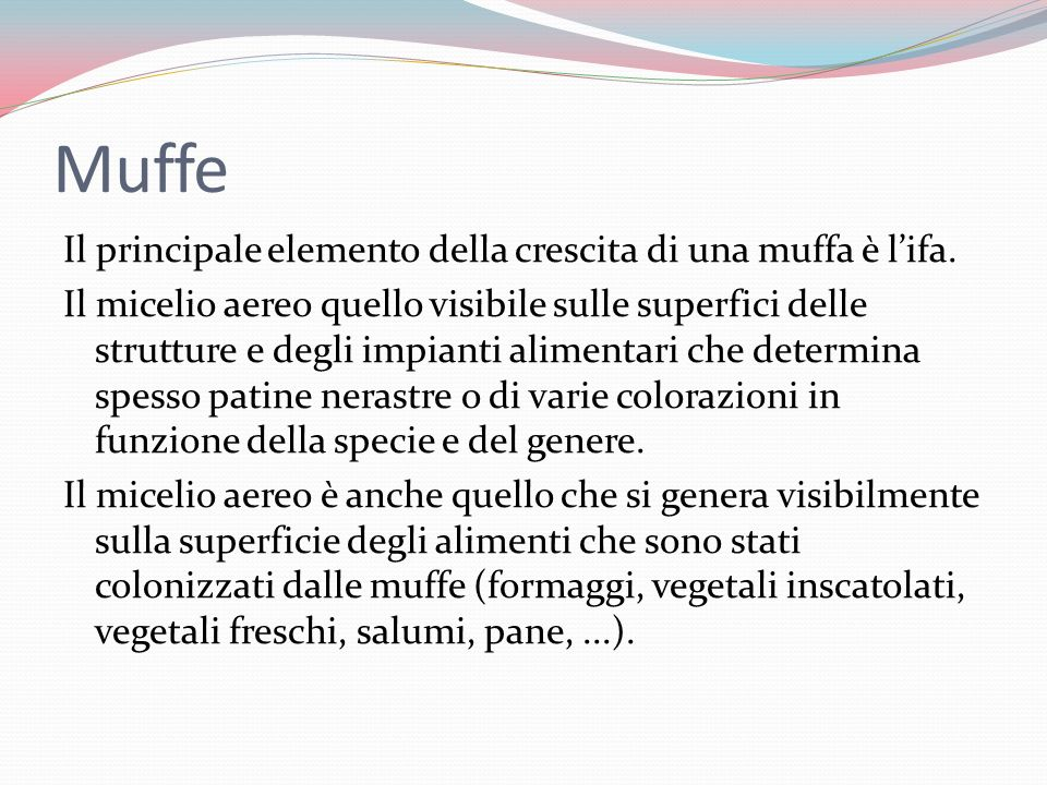 Muffe Il principale elemento della crescita di una muffa è lifa.
