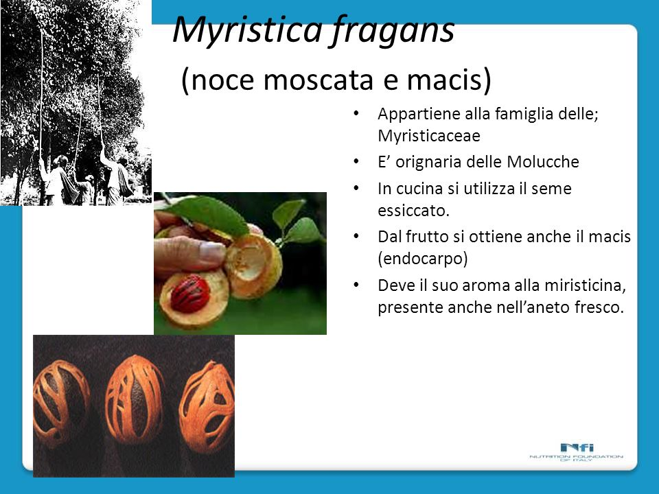 Myristica fragans (noce moscata e macis) Appartiene alla famiglia delle; Myristicaceae E orignaria delle Molucche In cucina si utilizza il seme essiccato.