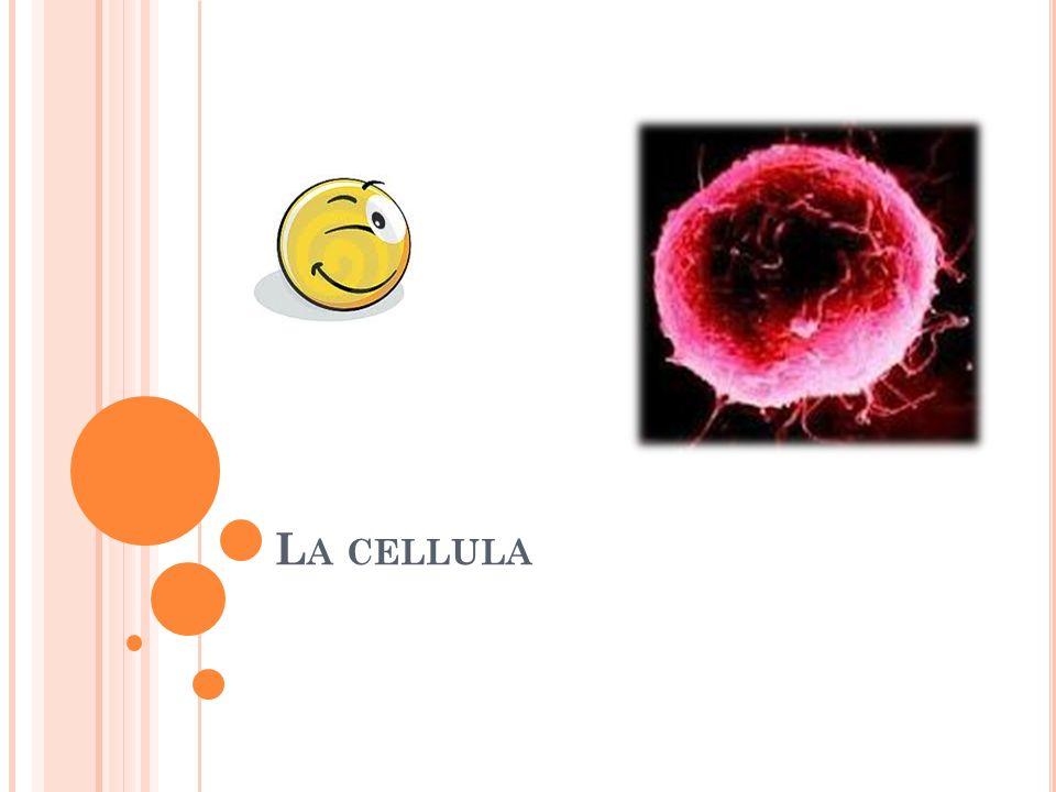 L A CELLULA
