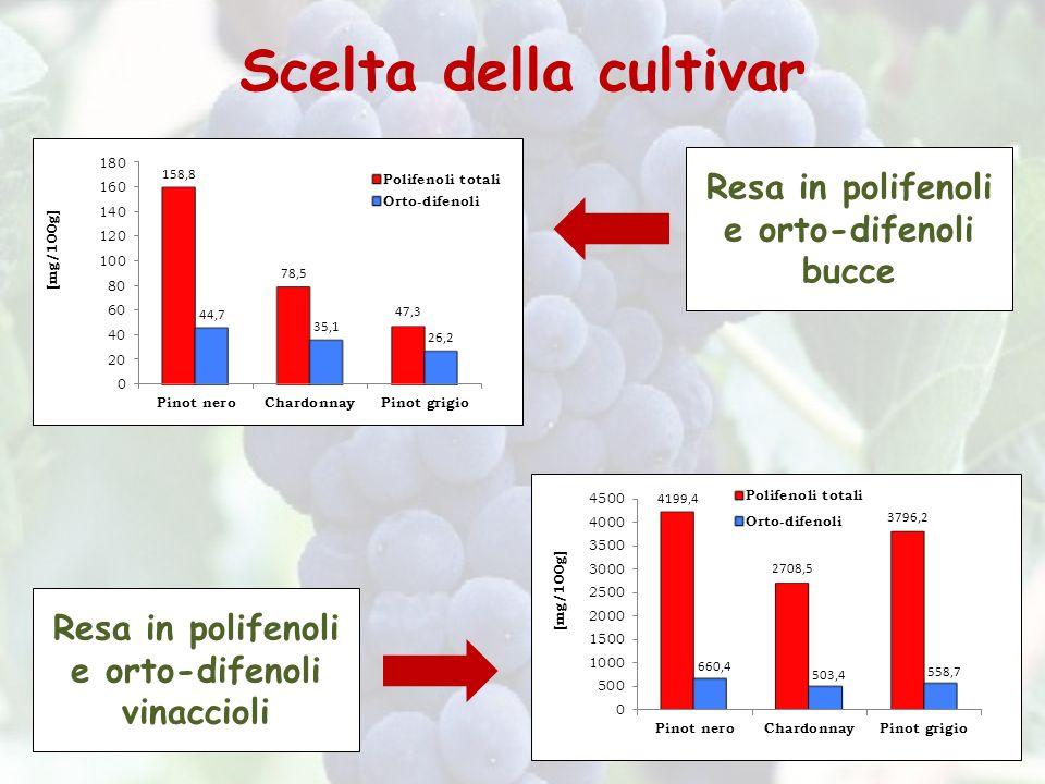 Scelta della cultivar Resa in polifenoli e orto-difenoli bucce Resa in polifenoli e orto-difenoli vinaccioli