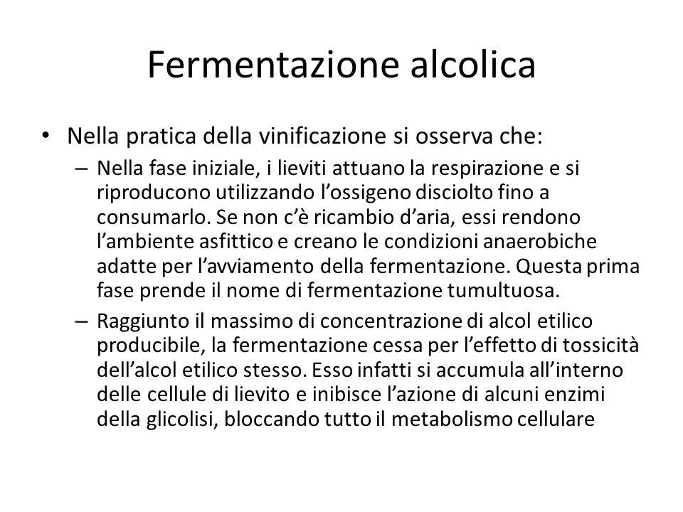 Fermentazione alcolica Nella pratica della vinificazione si osserva che: – Nella fase iniziale, i lieviti attuano la respirazione e si riproducono utilizzando lossigeno disciolto fino a consumarlo.