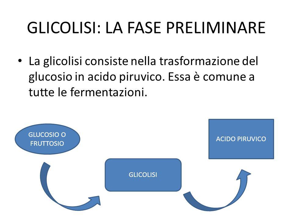 GLICOLISI: LA FASE PRELIMINARE La glicolisi consiste nella trasformazione del glucosio in acido piruvico. Essa è comune a tutte le fermentazioni. GLUC