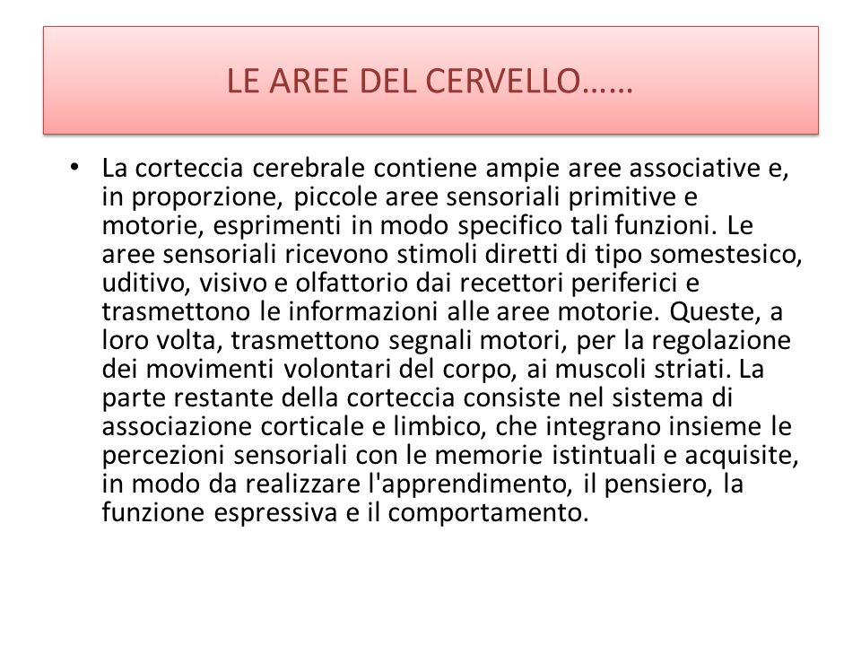 LE AREE DEL CERVELLO…… La corteccia cerebrale contiene ampie aree associative e, in proporzione, piccole aree sensoriali primitive e motorie, esprimen