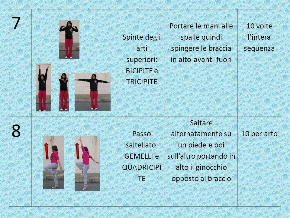 9 Galoppo laterale: ADDUTTORI e ABDUTTORI gemelli (per gli arti inferiori), TRAPEZIO e DELTOIDE (per gli arti superiori).