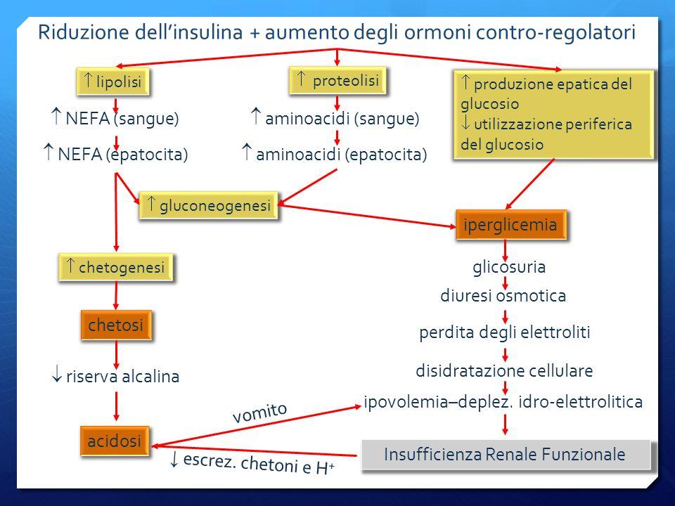 Riduzione dellinsulina + aumento degli ormoni contro-regolatori lipolisi produzione epatica del glucosio utilizzazione periferica del glucosio proteolisi NEFA (sangue) NEFA (epatocita) aminoacidi (sangue) aminoacidi (epatocita) gluconeogenesi iperglicemia glicosuria diuresi osmotica perdita degli elettroliti disidratazione cellulare ipovolemia–deplez.