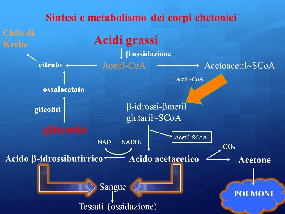Ciclo di Krebs citrato Sintesi e metabolismo dei corpi chetonici Acidi grassi Acetil-CoA ossidazione glucosio ossalacetato glicolisi Acetoacetil SCoA -idrossi- metil glutaril SCoA + acetil-CoA POLMONI Acido -idrossibutirrico Acido acetacetico Acetone Acetil-SCoA NADNADH 2 CO 2 Sangue Tessuti (ossidazione)