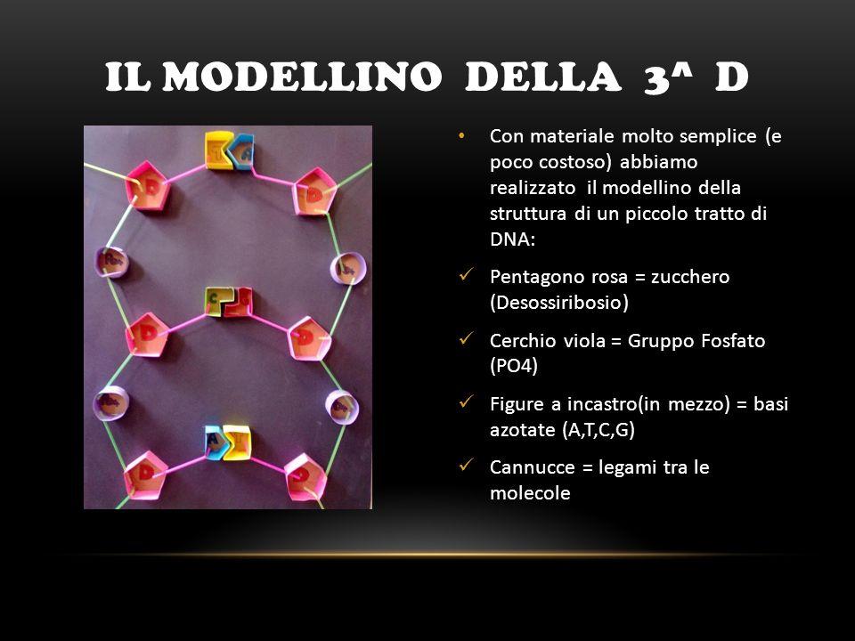a doppia elica Con i mattoncini «Lego», lalunno Alessandro Pirelli della classe 3^ A, ha realizzato le due catene del DNA (una rossa e laltra blu), che si avvolgono una attorno allaltra, formando la famosa struttura a doppia elica I mattoncini grigi rappresentano le basi azotate, che tengono unite le due catene I mattoncini grigi rappresentano le basi azotate, che tengono unite le due catene IL MODELLINO DELLA 3^ A