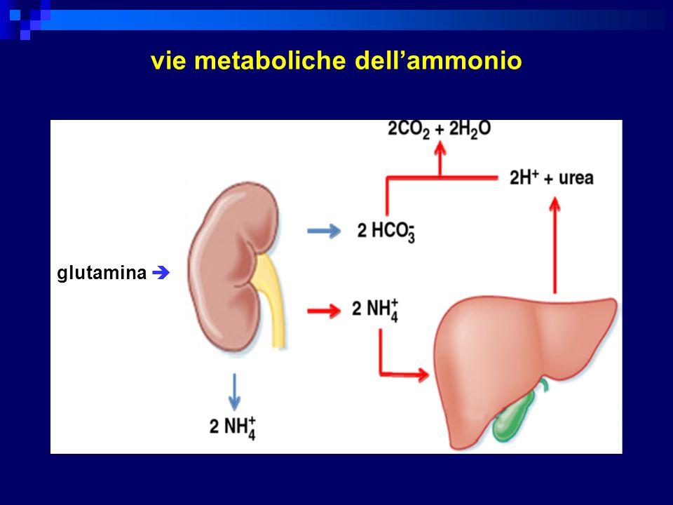 glutamina vie metaboliche dellammonio