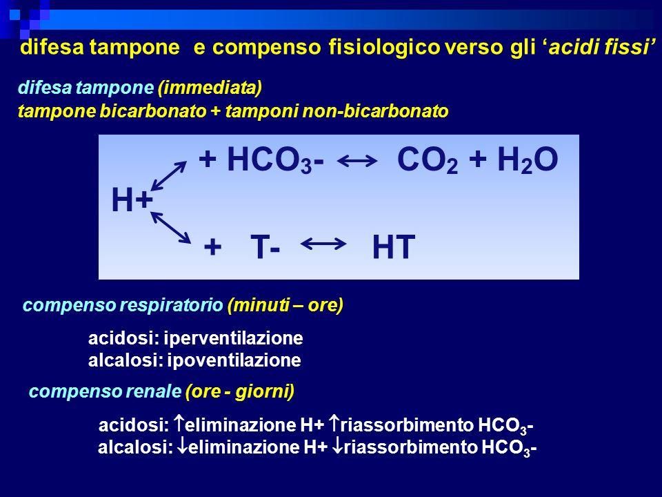 H+ + HCO 3 - CO 2 + H 2 O + T- HT difesa tampone e compenso fisiologico verso gli acidi fissi difesa tampone (immediata) tampone bicarbonato + tamponi