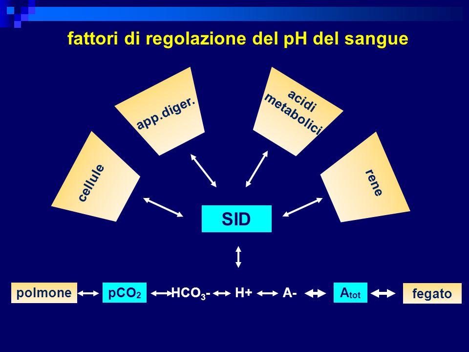 SID polmonepCO 2 H+A-A tot fegato fattori di regolazione del pH del sangue HCO 3 - cellule app.diger. acidi metabolici rene