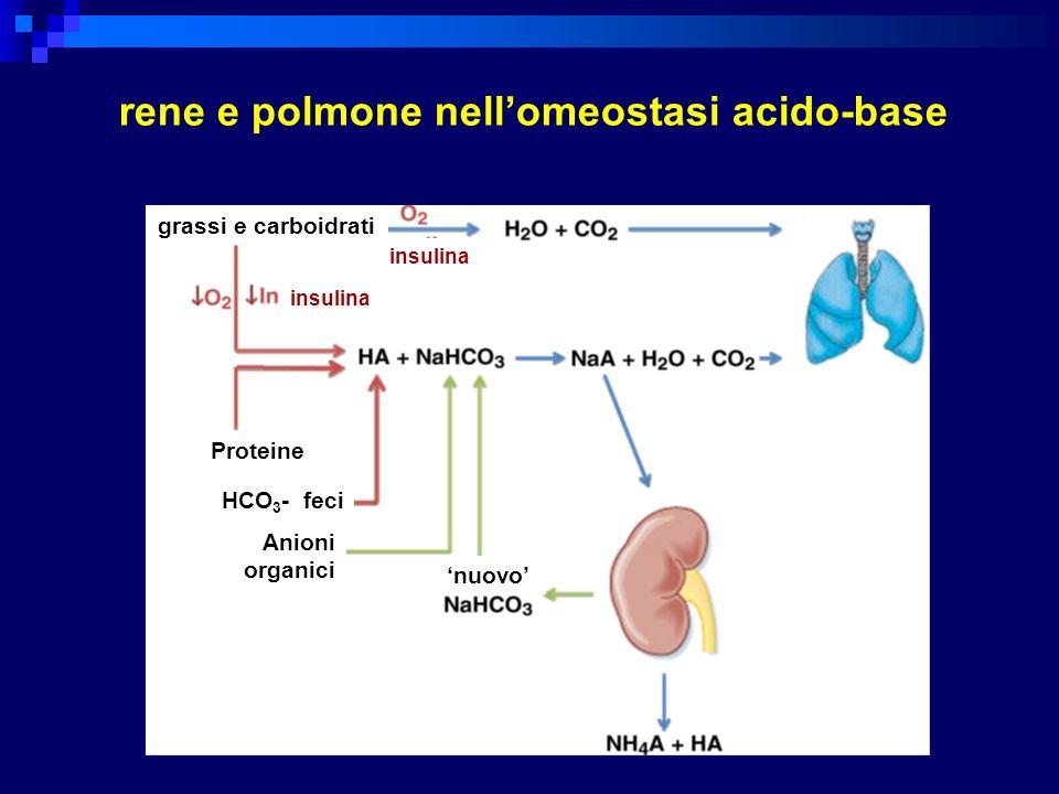 limiti di compenso fisiologico nei disordini acido-base metabolici acidosi HCO 3 - 1 mEq/L - pCO 2 1.3 mmHg alcalosi HCO 3 - 1 mEq/L - pCO 2 0.7 mmHg (limite 55 mmHg)