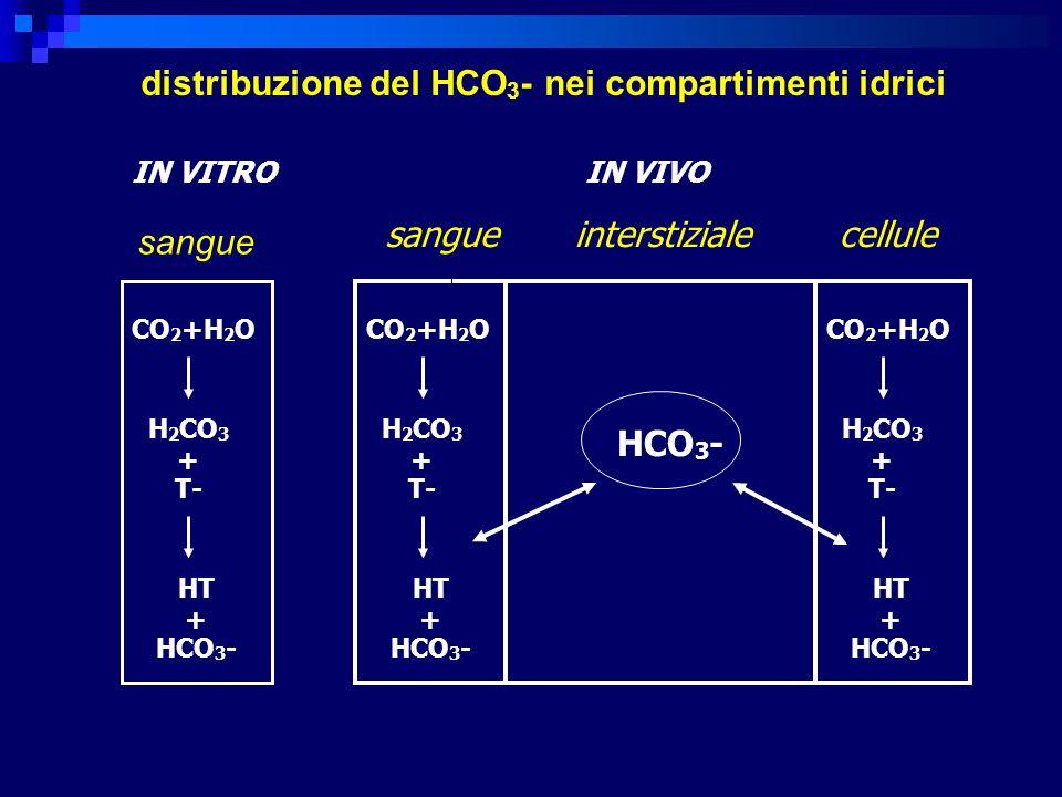 HCO 3 - in vitro in vivo sangue sangue interstiziale cellule CO 2 +H 2 O H 2 CO 3 + T- HT + HCO 3 - CO 2 +H 2 O H 2 CO 3 + T- HT + HCO 3 - CO 2 +H 2 O