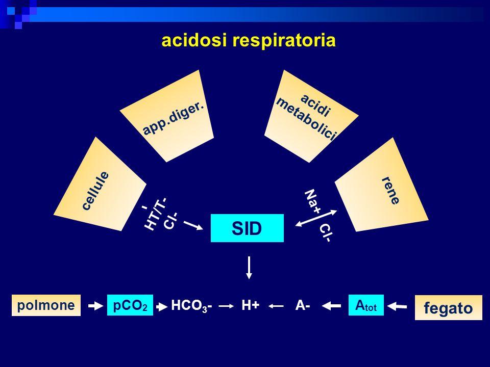 SID polmonepCO 2 H+A-A tot fegato acidosi respiratoria HCO 3 - cellule app.diger. acidi metabolici rene HT/T- Cl- Na+ Cl-