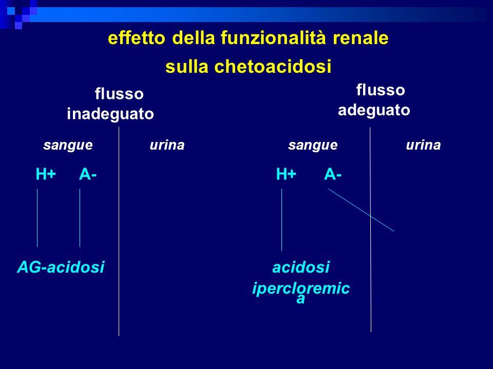 sangue urina flusso inadeguato H+ A- AG-acidosi sangue urina H+ A- acidosi ipercloremic a flusso adeguato effetto della funzionalità renale sulla chet