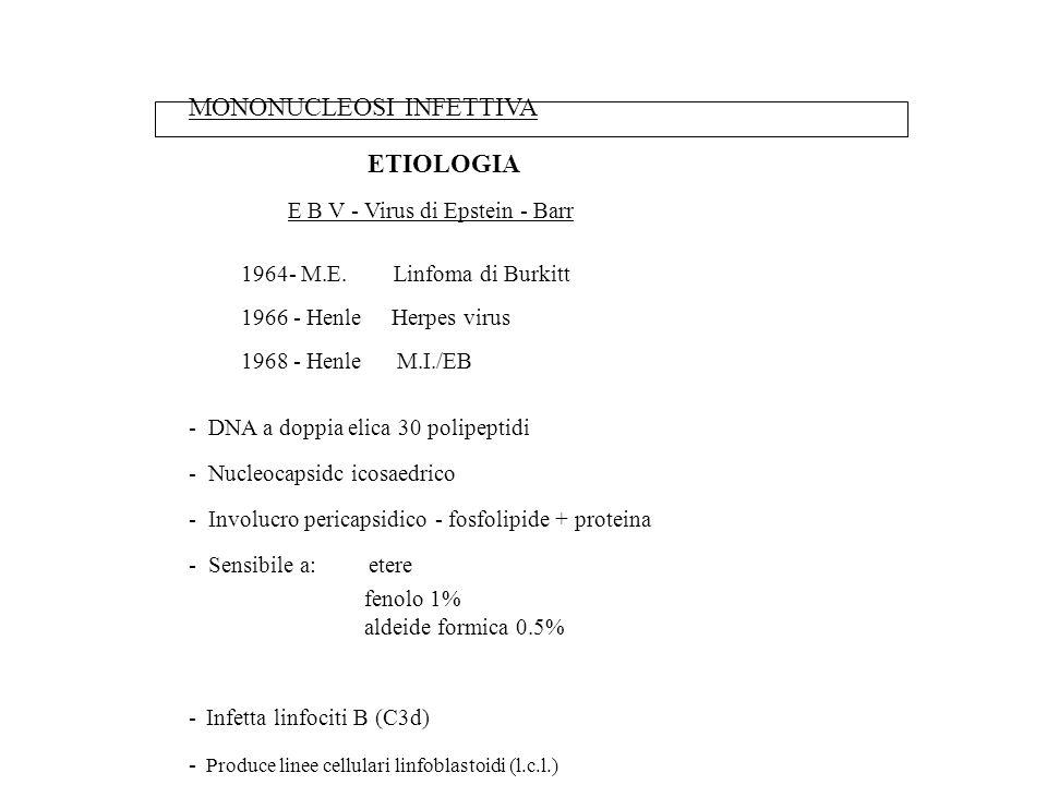 MONONUCLEOSI INFETTIVA ETIOLOGIA E B V - Virus di Epstein - Barr 1964- M.E. Linfoma di Burkitt 1966 - Henle Herpes virus 1968 - Henle M.I./EB - DNA a