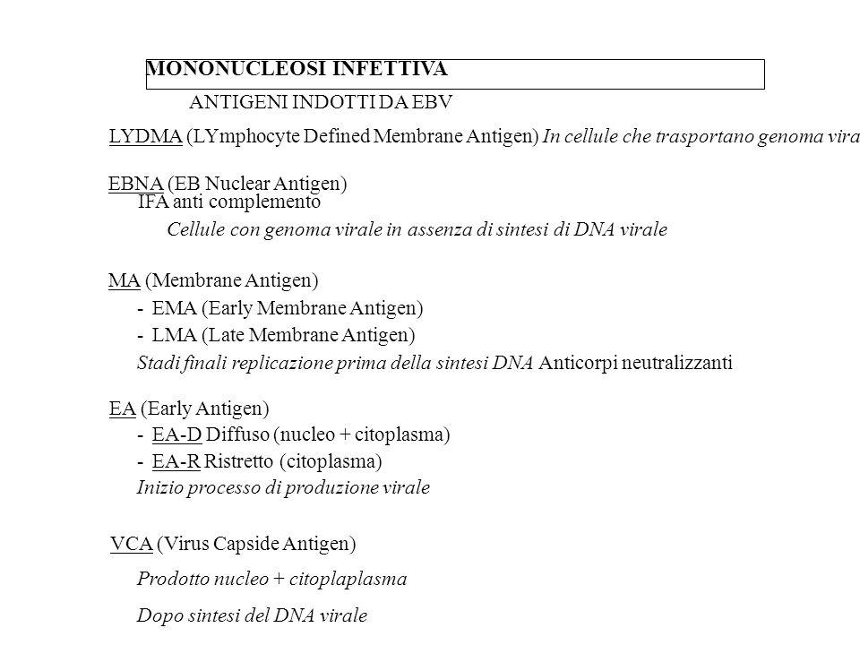 MONONUCLEOSI INFETTIVA ANTIGENI INDOTTI DA EBV LYDMA (LYmphocyte Defined Membrane Antigen) In cellule che trasportano genoma virale EBNA (EB Nuclear A
