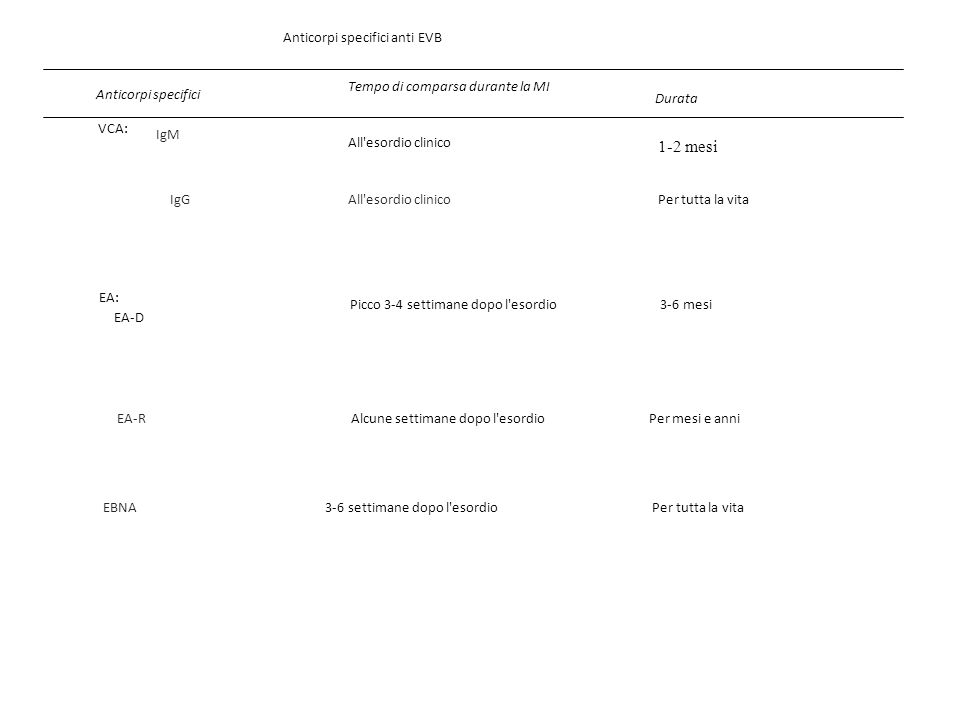 Anticorpi specifici anti EVB Anticorpi specifici Tempo di comparsa durante la MI Durata VCA: All'esordio clinico 1-2 mesi All'esordio clinico Per tutt