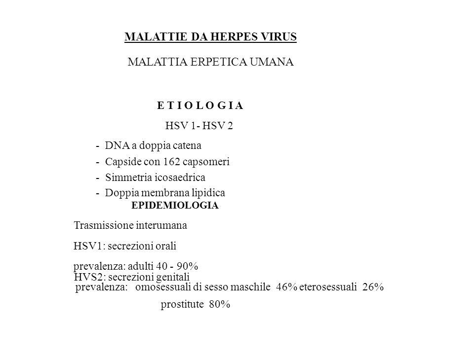 C YTO M E G A L O V I R U S MANIFESTAZIONI CLINICHE INFEZIONI DELL IMMUNOCOMPROMESSO Trapianti di organo ( 1 – 4 ° mese) (1^ infezione o riattivazione) febbre - leucopenia - epatite – Colite ulcerativa polmonite (20% tr.