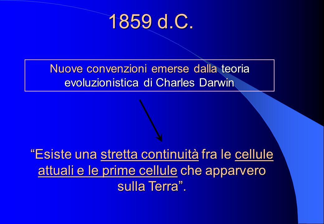 1858 d.C. Rudolf Virchow (1821-1902) anatomopatologo Affermò che le cellule possono essere originate solo da cellule preesistenti Quando una cellula e