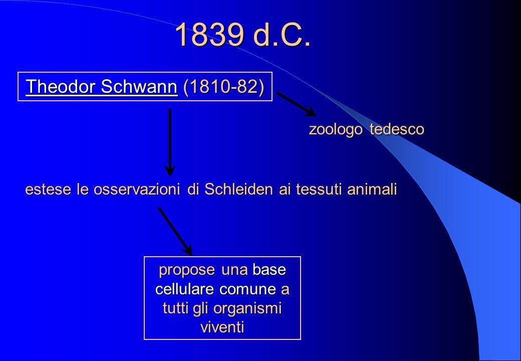 1838 d.C. (1804-81) Matthias J. Schleiden (1804-81) botanico tedesco concluse che tutti i tessuti vegetali sono costituiti da insiemi organizzati di c
