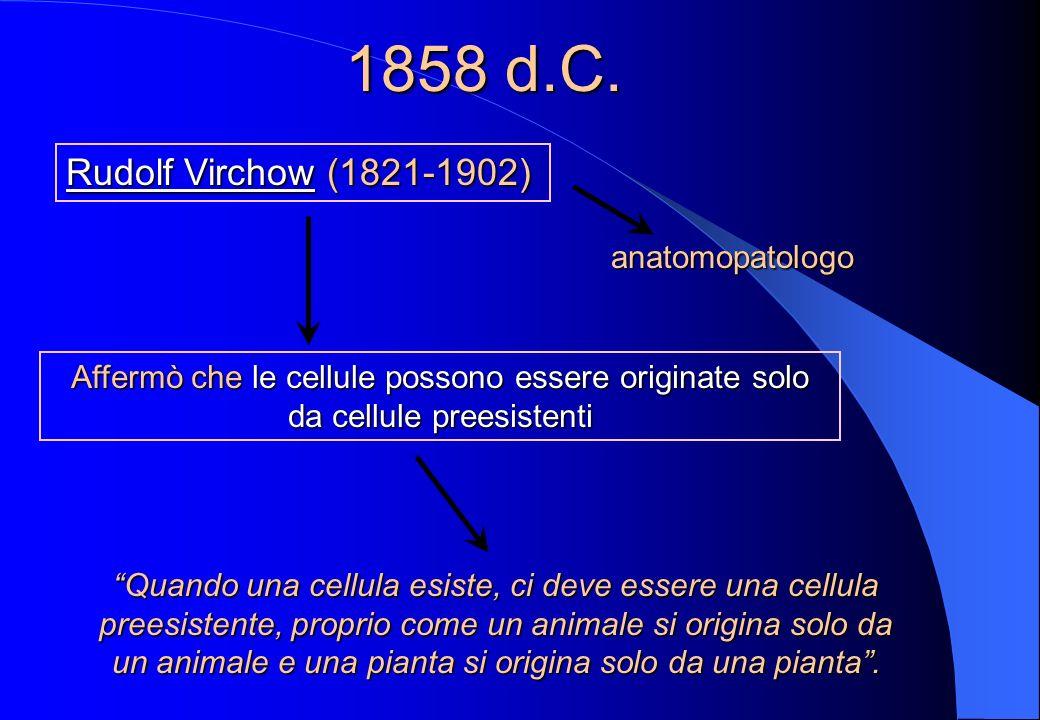 1839 d.C. Theodor Schwann (1810-82) zoologo tedesco estese le osservazioni di Schleiden ai tessuti animali propose una base cellulare comune a tutti g