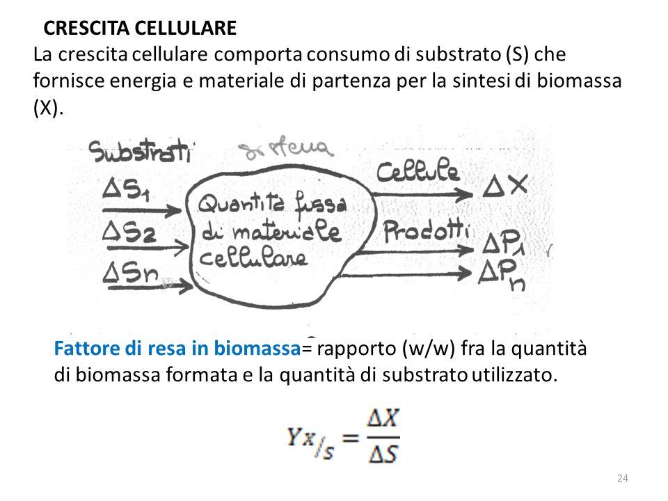 CRESCITA CELLULARE La crescita cellulare comporta consumo di substrato (S) che fornisce energia e materiale di partenza per la sintesi di biomassa (X)