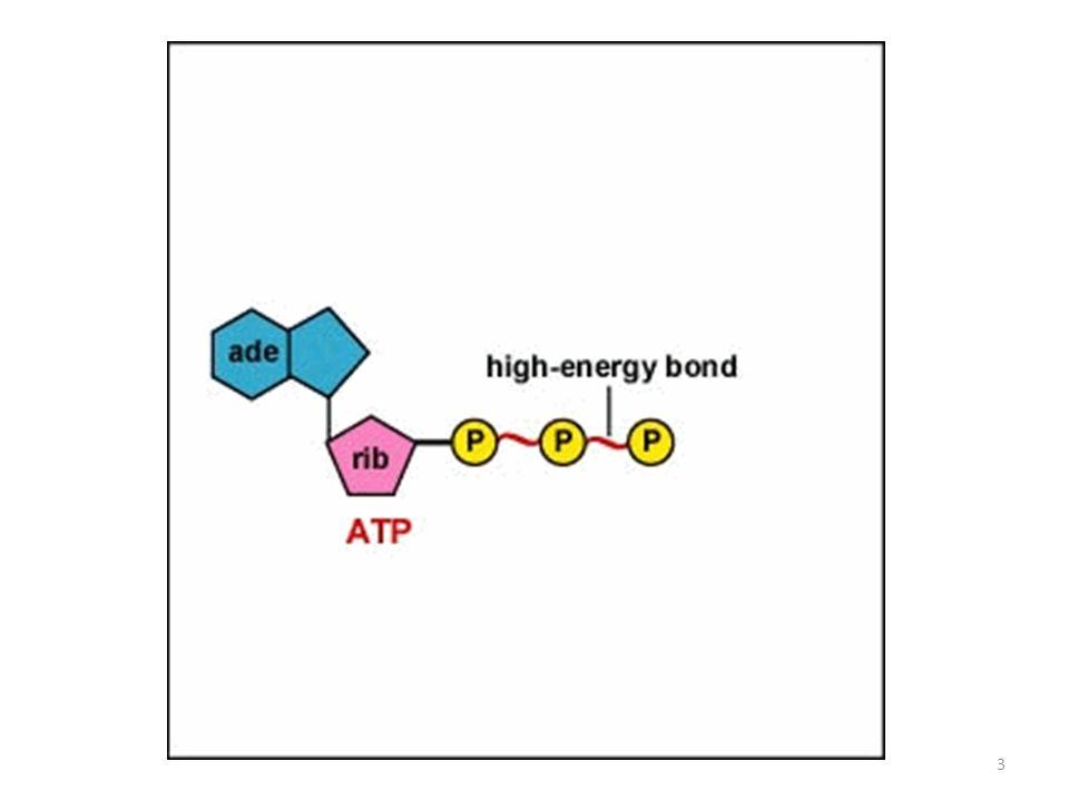 CRESCITA CELLULARE La crescita cellulare comporta consumo di substrato (S) che fornisce energia e materiale di partenza per la sintesi di biomassa (X).