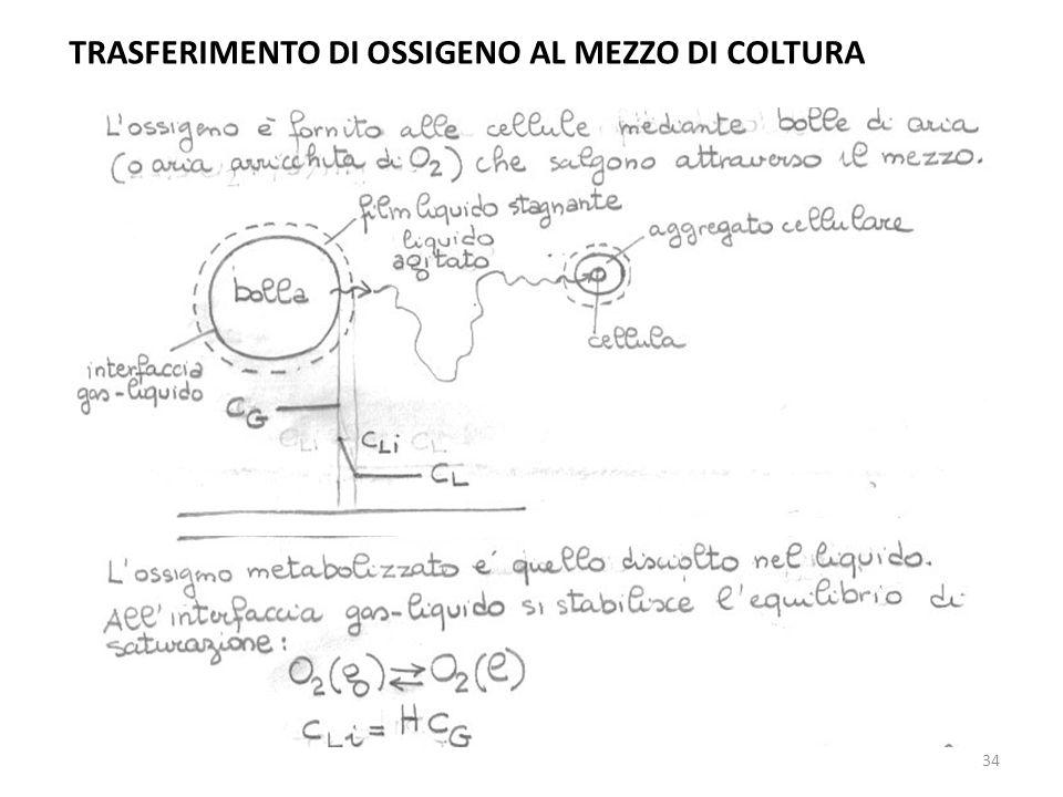 TRASFERIMENTO DI OSSIGENO AL MEZZO DI COLTURA 34