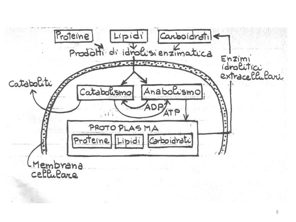 Stechiometria con formazione di prodotti Diversi prodotti metabolici sono rilasciati nel mezzo di crescita o accumulati nella cellula.