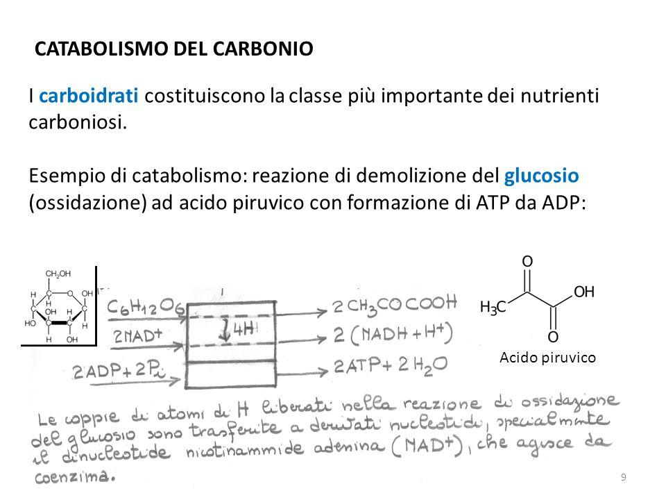 CATABOLISMO DEL CARBONIO I carboidrati costituiscono la classe più importante dei nutrienti carboniosi. Esempio di catabolismo: reazione di demolizion