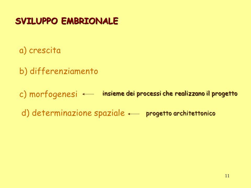 SVILUPPO EMBRIONALE a) crescita b) differenziamento c) morfogenesi d) determinazione spaziale insieme dei processi che realizzano il progetto progetto