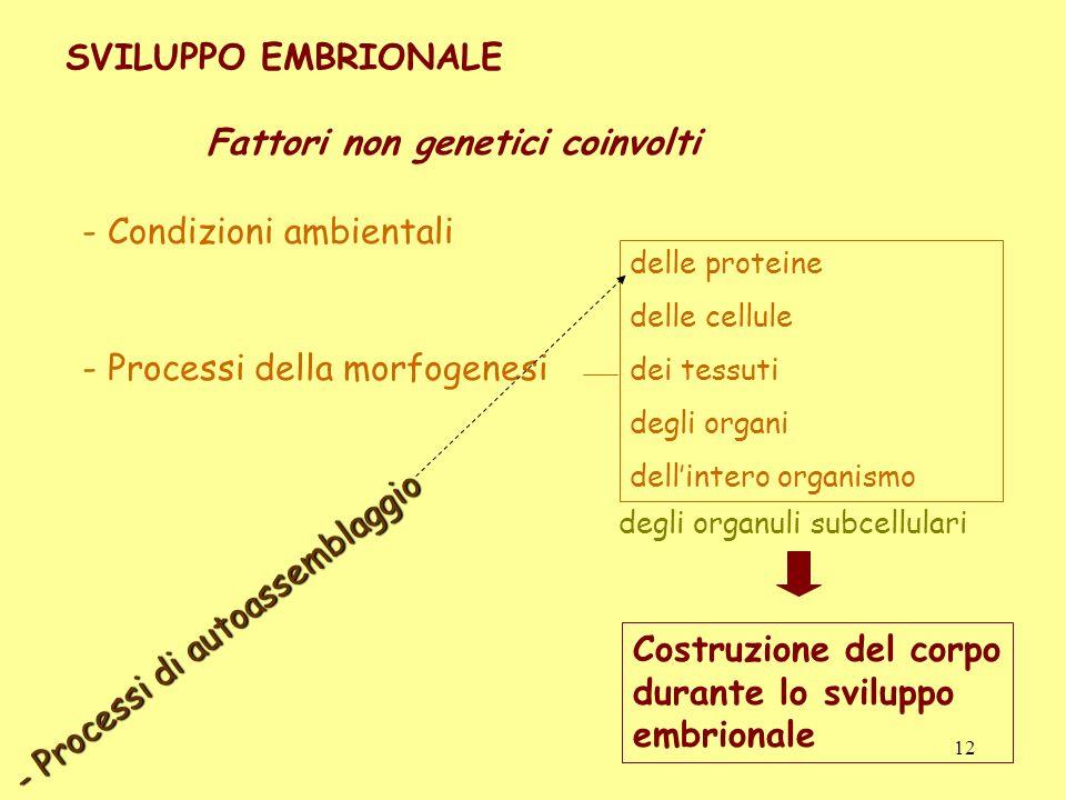 SVILUPPO EMBRIONALE Fattori non genetici coinvolti - Condizioni ambientali - Processi della morfogenesi delle proteine delle cellule dei tessuti degli