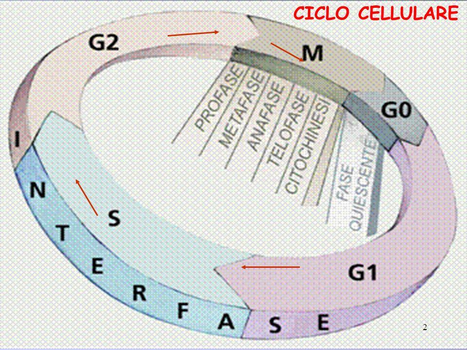 CICLO CELLULARE 2