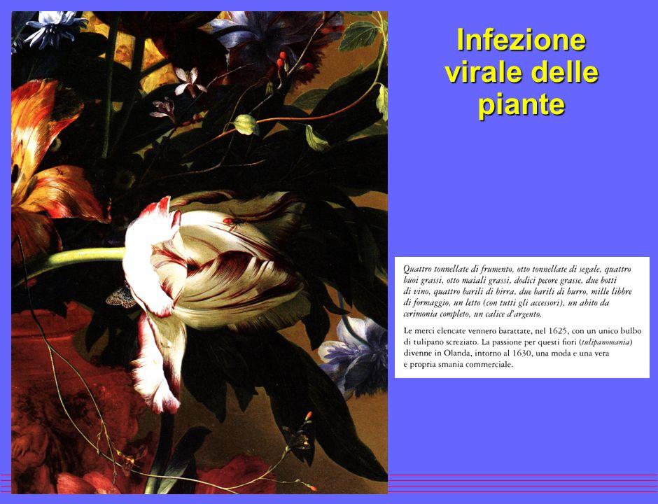 Infezione virale delle piante (mosaico del tabacco)