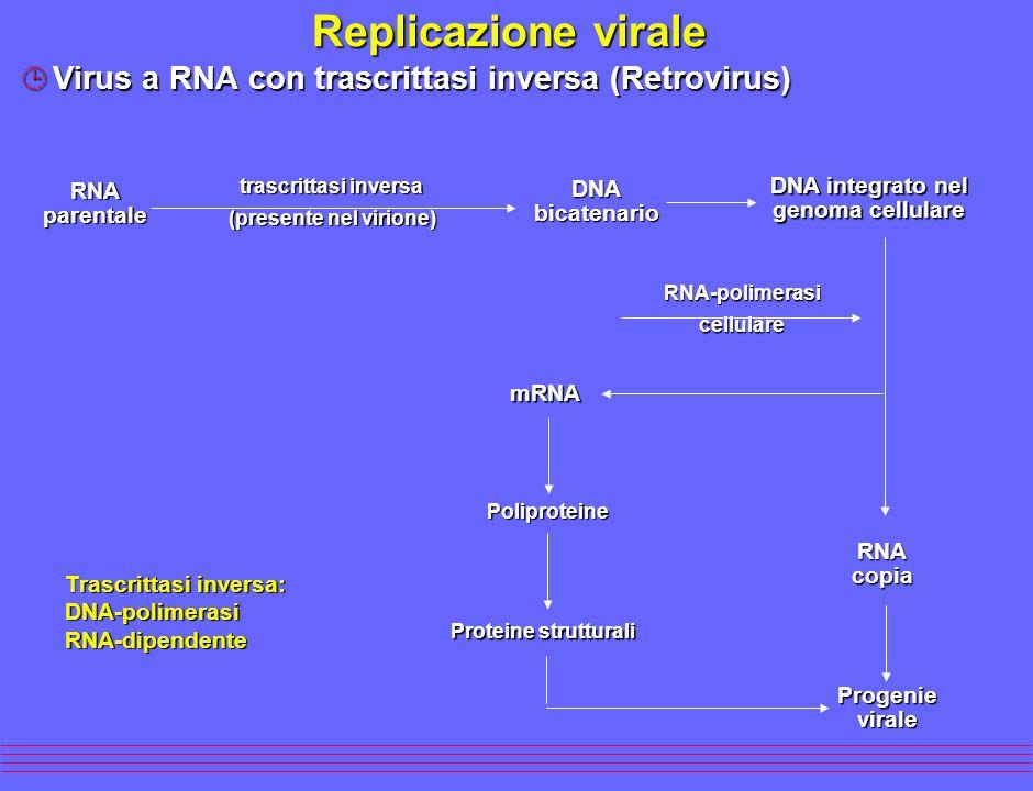 Replicazione virale ¹Virus a RNA con trascrittasi inversa (Retrovirus) RNAparentale RNAcopia Progenievirale Proteine strutturali trascrittasi inversa