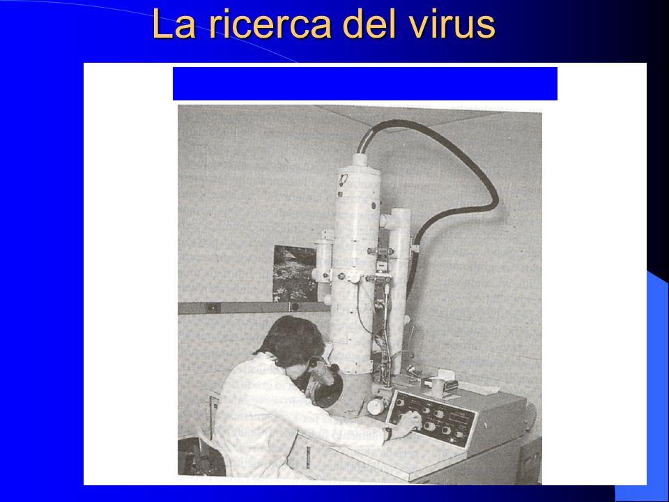 I marcatori sierologici dellHCV nel periodo seguente allinfezione Infection Infezione HCV RNA 1 2 EIA 3.0 EIA 2.0 3 EIA 1.0 4 0 0 13 70 80 150 (giorni) 150 Ortho-Clinical Diagnostics