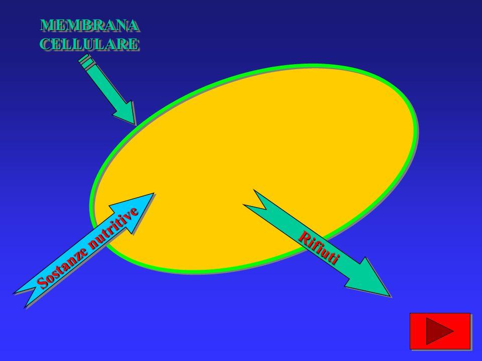 …la membrana cellulare lascia entrare le sostanze nutritive e fa uscire i rifiuti...